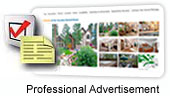Property Listings are optimized for Travelers and Search Engines
